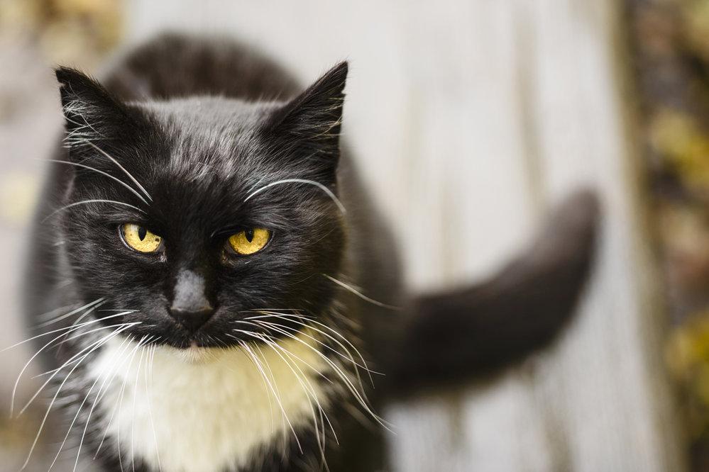 černá tlustá kočička pic