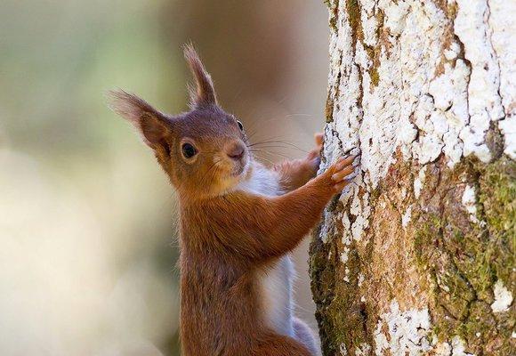 Chcete se zbavit starostí? Vylezte na strom!