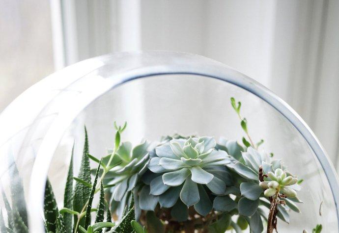 Vytvořte si doma mini zahradu
