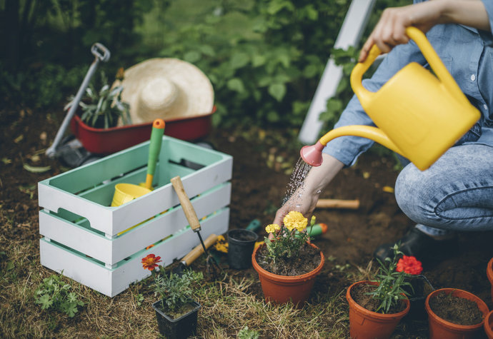Chraňte květiny před horkem! Máme pro vás skvělé tipy