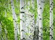 Vyberte si strom a zjistěte, jaké jsou vaše silné stránky