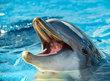 Delfíni se probouzí neodpočatí