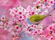 Nejkrásnější rozkvetlé stromy a zahrady