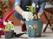 Můj život s květinami: Jak změnit a zlepšit vztah k zahradničení?