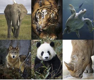 Test osobnosti: Co o vás vypovídá vaše oblíbené zvíře?