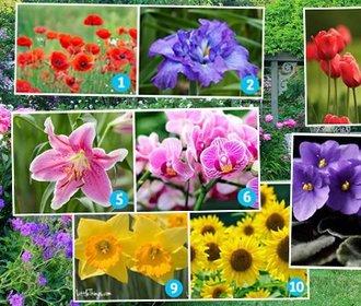 Otestujte se: Co říká vaše oblíbená květina o tom, jaká ve skutečnosti jste?