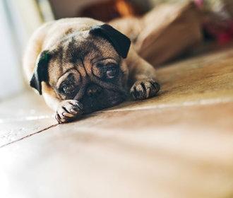 Chybí vám hormon lásky? Oxytocin vám zajistí mazlení i pohled do očí psa