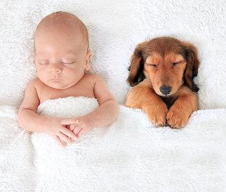 10 důkazů, že jsou psi lepší než polštář