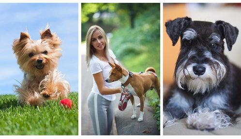 Nejlepší psí mazlíčci pro alergiky. Kterou rasu vybrat, abyste netrpěli?