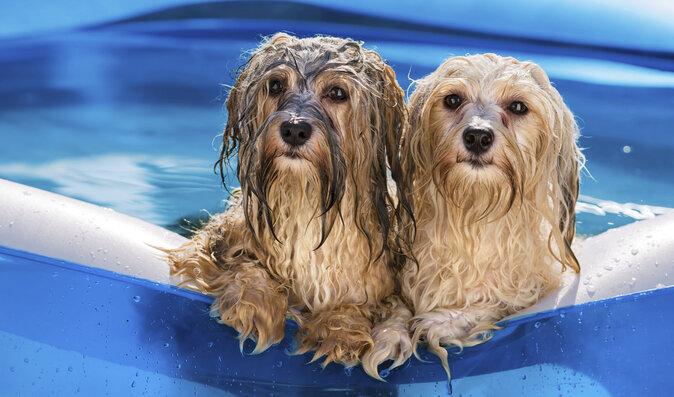 Zvířata se také opalují: Co dělat, aby se nespálila a přežila horké letní dny ve zdraví?