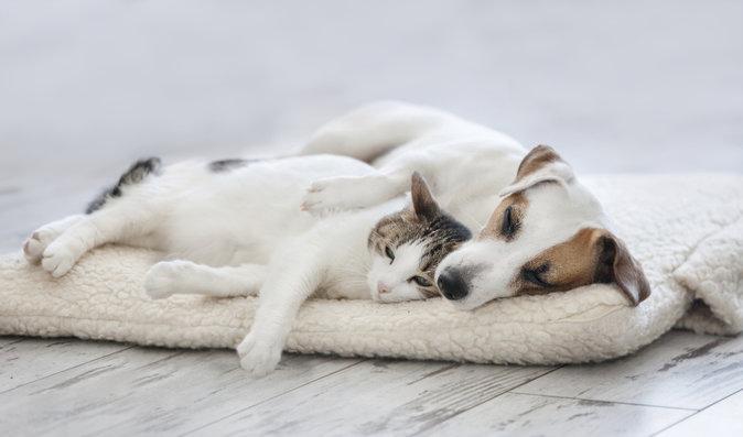 Toxoplazmóza, chlamydie, salmonelóza: Čím vším vás může nakazit domácí mazlíček?