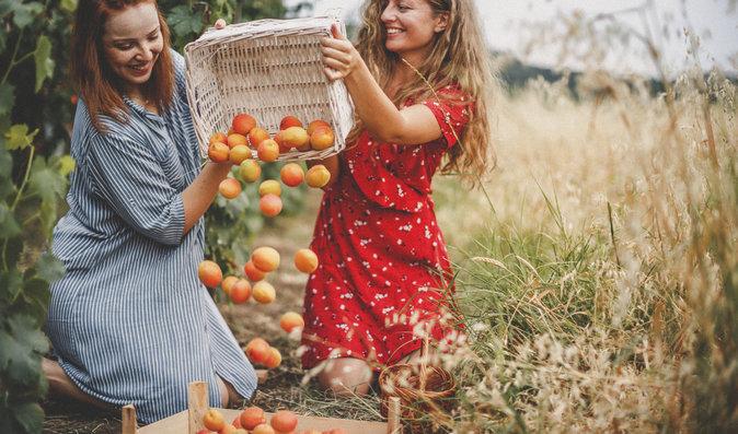 Chcete se vyhnout rakovině? Vsaďte na meruňky!