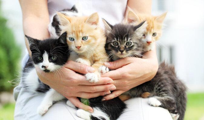 Domácí zvířata prospívají zdraví. Jak pomáhají tělu i psychice?