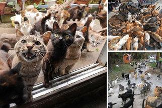 Kočky jsou pánem japonského ostrova: Vyhubily myši a teď trápí lidi
