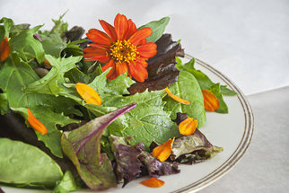 Jedlé květy: Ingredience z luk a zahrad