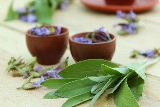 Bylinky na jaře jsou plné síly: Kopřiva detoxikuje, pažitka má vitamíny