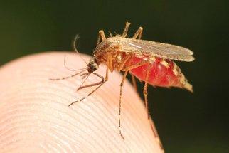 Virus Zika: Zájem o něj utichl, děti však zabíjí dál