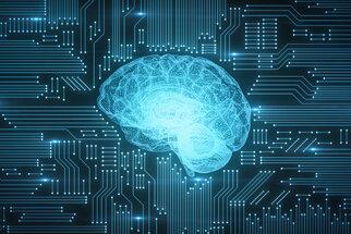 Jak se liší mozek mužů a žen? A kolik mozkových buněk zabije alkohol?