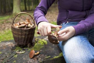 Otrava houbami: Poznejte včas její projevy a zachraňte si život