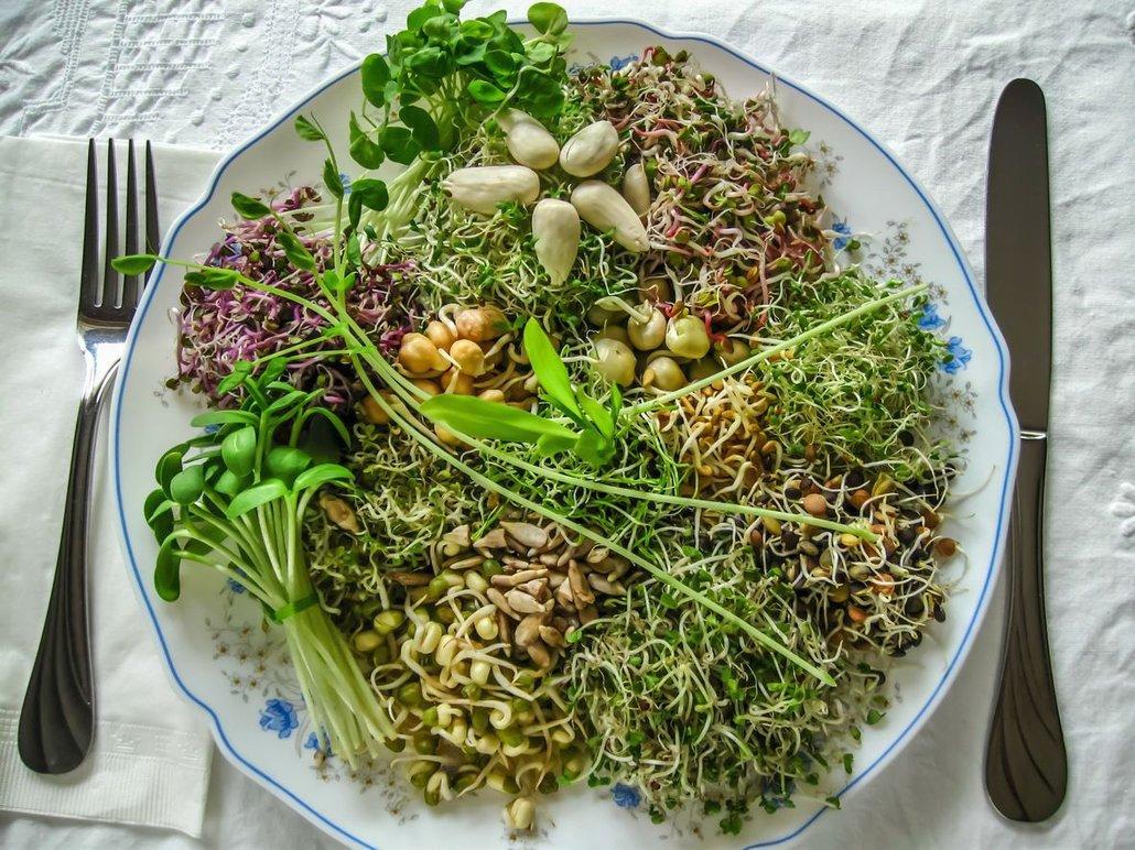 Klíčit lze jak luštěniny, tak i semínka a obiloviny