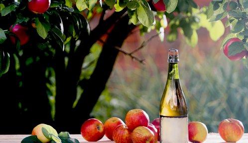 Cider a cidre: Jaký je rozdíl mezi nápoji z kvašeného moštu?