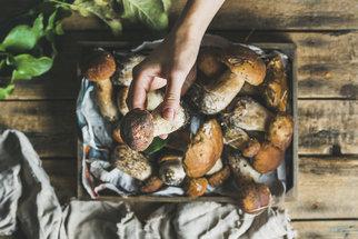 Jak zpracovat houby: Jak je sušit, zamrazit a co uvařit, když přinesete plný košík