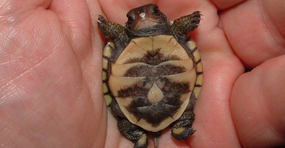 Čemu se ty želvičky tak často smějí? Jsou šťastné nebo škodolibé?