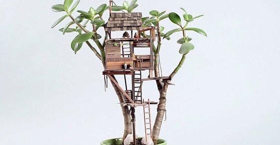 Stromové domky můžete mít i na pokojových rostlinách