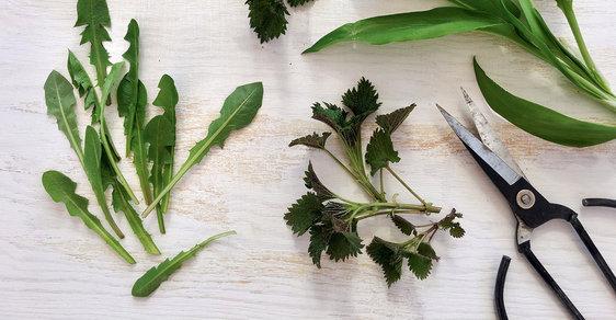 Jarní gastrohit: Na špici se drží medvědí česnek, kopřivy a listy pampelišek