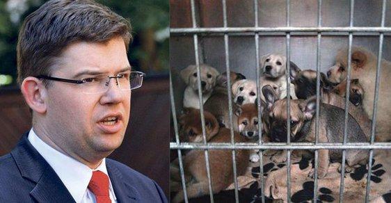 TOP 09 navrhuje zpřísnění trestů za týrání zvířat, nově bude možné stíhat provozovatele množíren