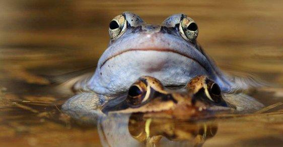 Kam o víkendu: Za obřími sochami z písku a modrými žábami