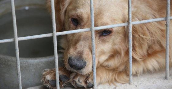 Psa najdete snadněji: Veterináři spustili databázi ztracených a nalezených psů, obsáhne i čipy