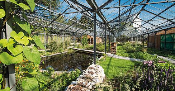 Bývalé skleníky dnes poskytují útočiště ohroženým motýlím druhům.