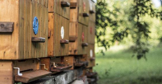 Stát zveřejnil přesná místa všech včelích úlů