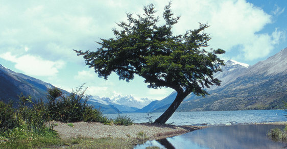 Výprava do národního parku Los Glaciares aneb Přímou cestou k srdci Patagonie