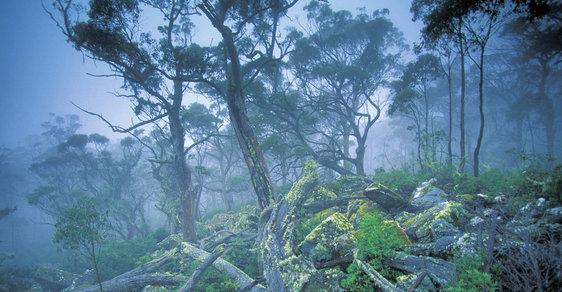 Blažený únik před zimou: Čtrnáctidenní trek přírodními parky Tasmánie