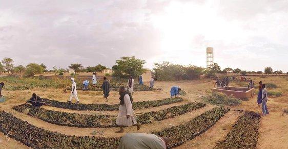 Velká zelená zeď: Projekt ozelenění Sahary chce na poušti vysázet lesy