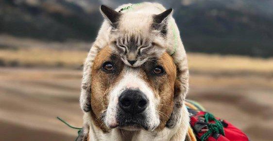 Pes Henry a kocour Baloo: Nerozlučná dvojice, která společně poznává svět