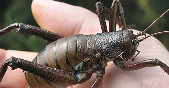 Svět obřího hmyzu: Záchrana podivuhodných živočichů, kteří neznali savce