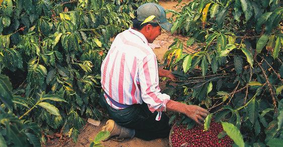 Do Guatemaly za vzácným kardamomem a voňavými kávovými zrnky