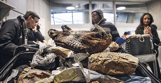 Prodej masa divokých zvířat