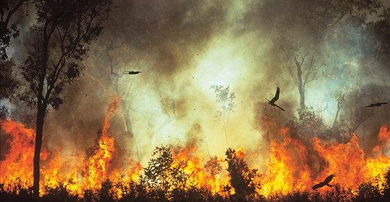 Na severu Austrálie se požáry objevují v průběhu celého roku, každoročně tu shoří až 50 % vegetace