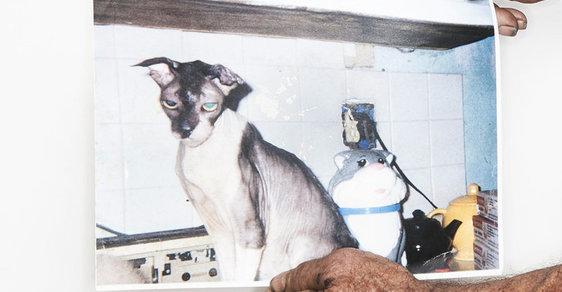 Co dělat, aby se vaše kočka dožila 165 let? Šampaňské, slanina a 3D filmy, říká kočičí rekordman