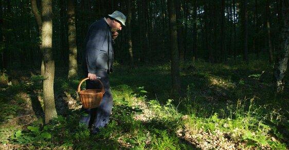 Nejpopulárnější sbíranou komoditou jsou v Česku tradičně houby.