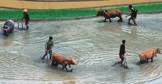 Tanec vodních buvolů v rýžových polích aneb Za horaly na sever Vietnamu