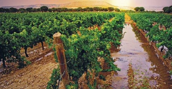 Do Španělska za vínem aneb Návštěva slavné vinařské oblasti Ribera del Duero
