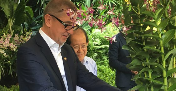 Po Andreji Babišovi pojmenovali v botanické zahradě v Singapuru orchidej