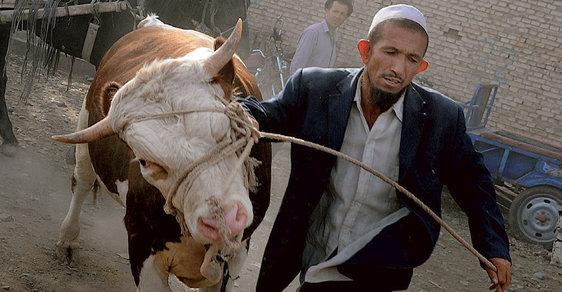 Kopytem sem, kopytem tam aneb Na dobytčím trhu v čínském Kašgaru