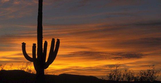 Státní symbol Arizony: Gigantické kaktusy saguaro se dožívají až 200 let a dorůstají výšky až 15 metrů
