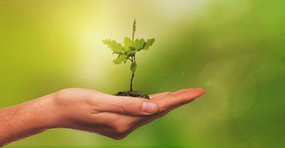 Iniciativa vysází 10 milionů stromů